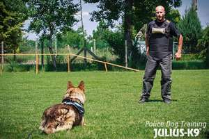 Picture for category Muzzle training