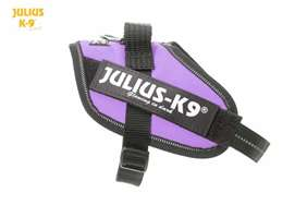 Julius-K9 IDC harness purple size mini