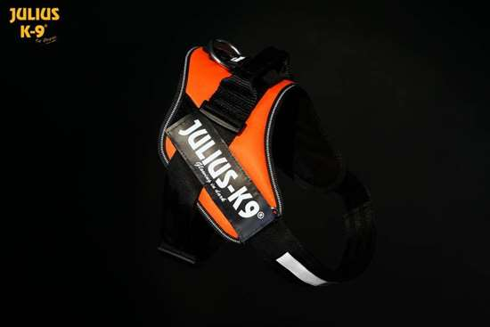 Julius-K9 IDC harness uv orange size 1
