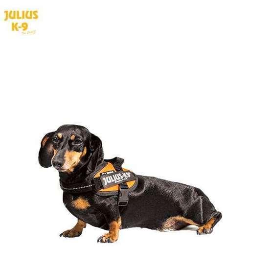 Julius-K9 Doxle