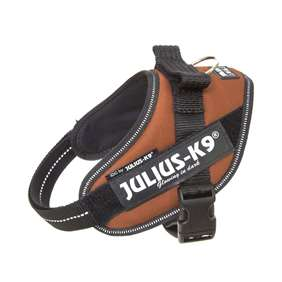Picture of Kupferorange, Mini Julius-K9 IDC® Powerharness