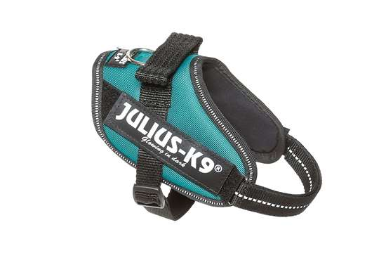 Picture of Petrol Green, Mini Julius-K9 IDC® Powerharness