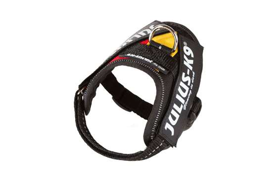 Picture of Belgian flag, Baby1 Julius-K9 IDC® Powerharness