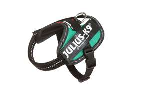 Picture of Italian flag, Baby2 Julius-K9 IDC® Powerharness