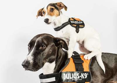 Julius-K9 Powerharness - The Power of Tradition
