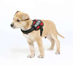 Picture for category Size Baby 2 Powerharness