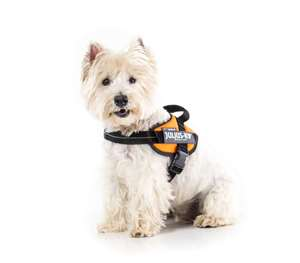 Picture for category Size Mini-Mini Powerharness