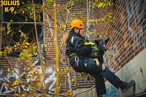 Picture for category Rappelling and carrying harness