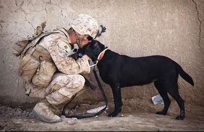Dogs In Warfare -  Kind-Hearted Soldiers