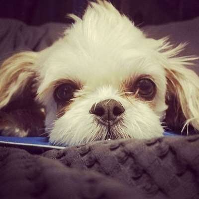 A 21st century thing: Dogs As Internet Celebrities